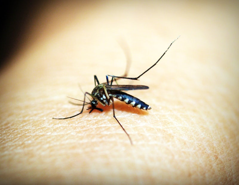 Typical house pests in Bangkok for foreigners