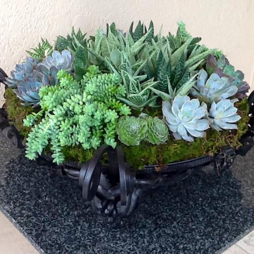 Succulent TablePiece