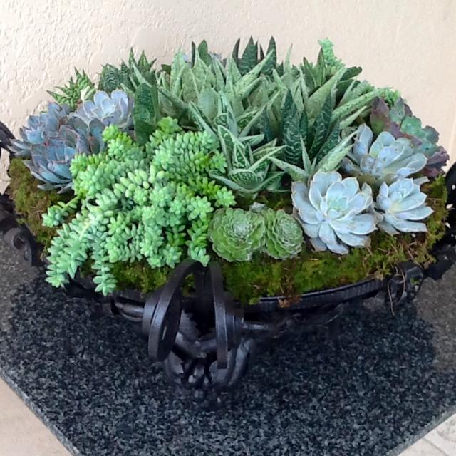 Succulent TablePiece Velene's Floral