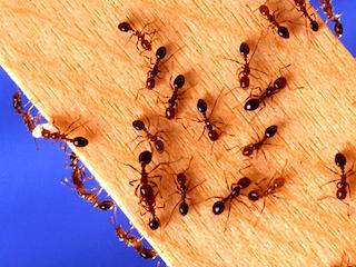 Pest Control Service Jamaica