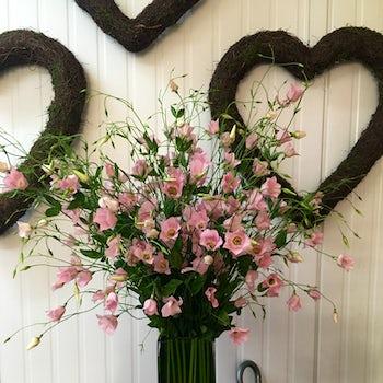 An explosion of Sporadic Pink Flowers Velene's Floral