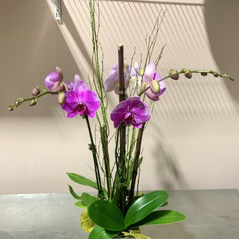 Purple Orchids with Height! Velene's Floral