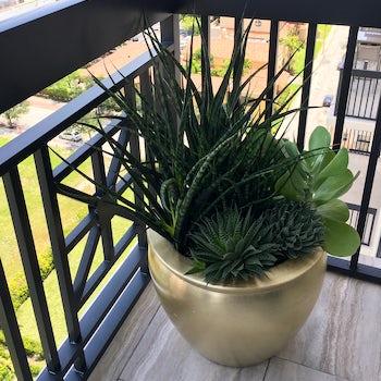 Balcony Plant Arrangement Velene's Floral