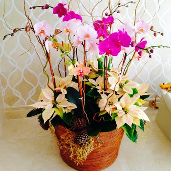 Tall Purple Orchids for Wedding  Velene's Floral