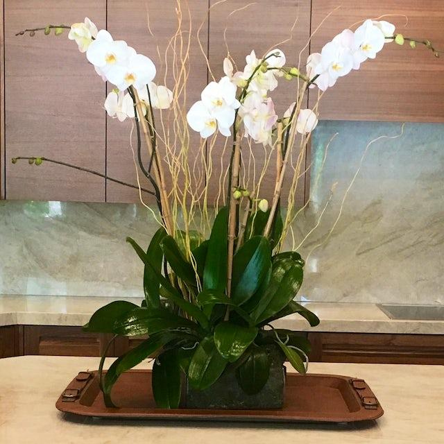 Tall White Orchids for Office Velene's Floral