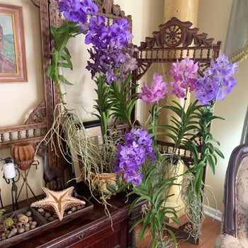 Pink and Purple Orchid Airplants Velene's Floral