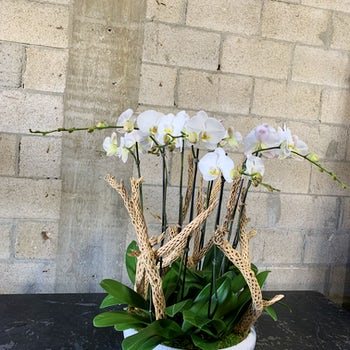 Orchids in Ceramic Bowl with wood Velene's Floral