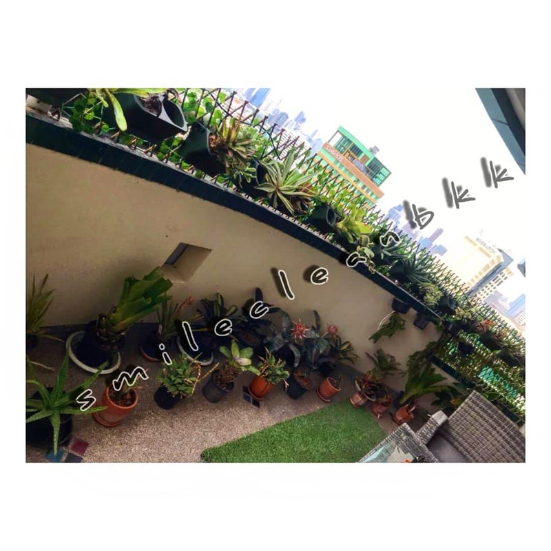 Maintaining the customer balcony garden at Asoke, Bangkok