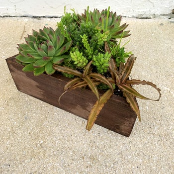 Triangular Container filled with Succulents Velene's Floral