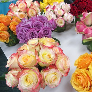 A Rainbow of Roses Velene's Floral