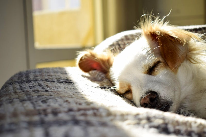 Tips and tricks to have a clean house with pets in Bangkok
