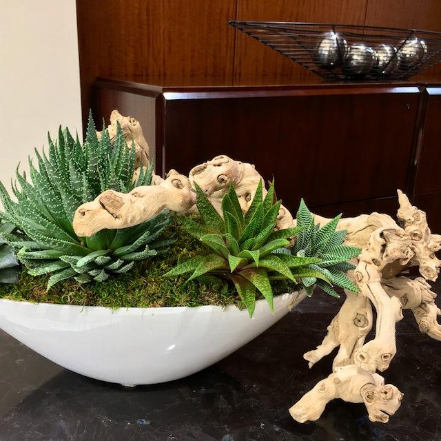 Unique Succulent Arrangement with Wood Velene's Floral