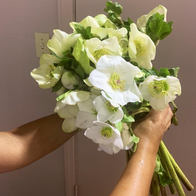 White Anemone Flowers Velene's Floral