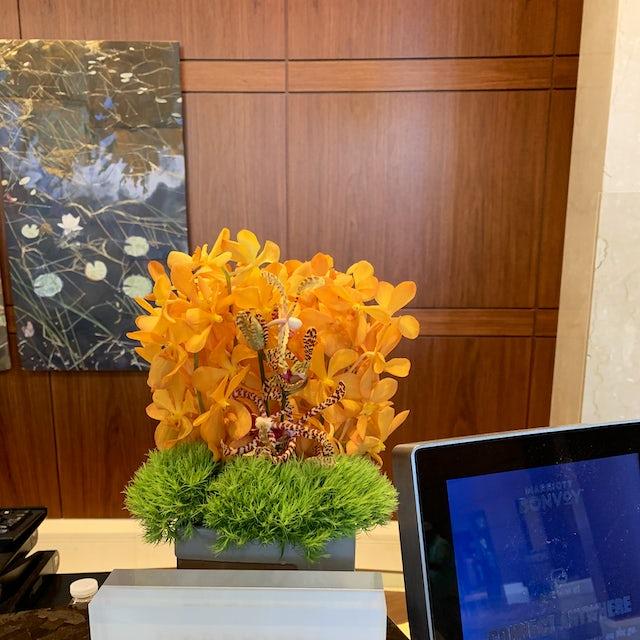 Orange Orchids for Hotel Lobby Velene's Floral