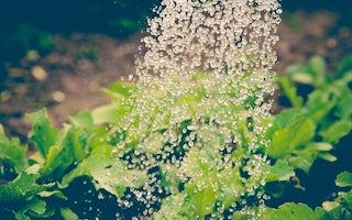 Plants & Garden Maintenance